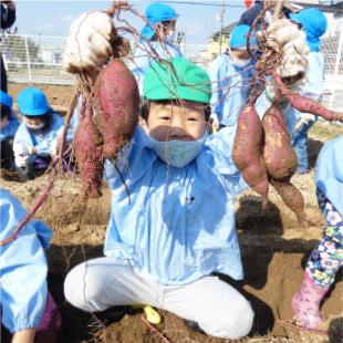 芋掘り・後期健康診断・園外保育 写真